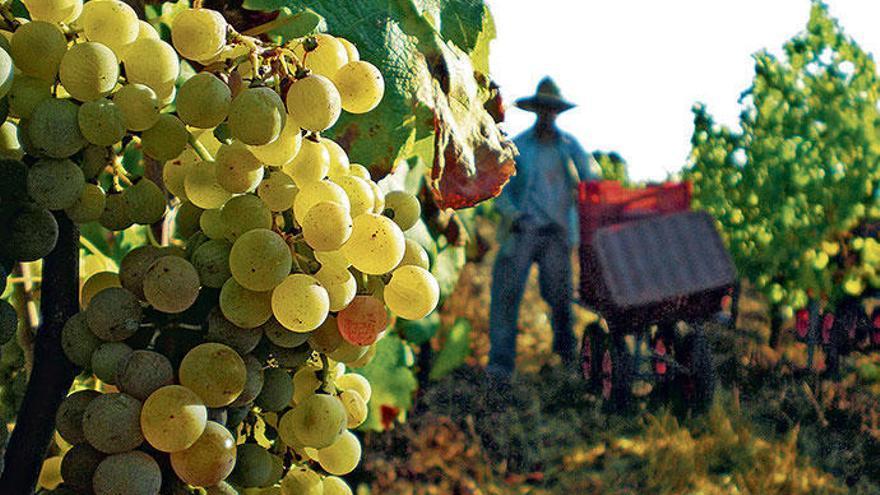 Öl- und Weinbauern sorgen sich um US-Strafzölle