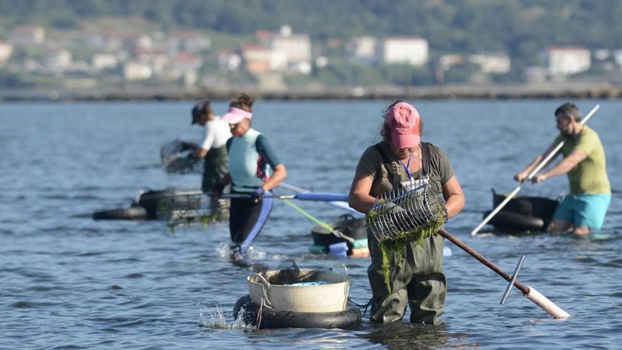 El marisqueo regresa a la ría de Pontevedra tras cuatro meses de parón