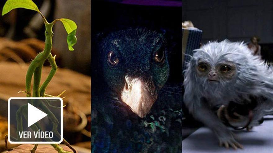 'Animales fantásticos y dónde encontrarlos': Así son sus criaturas