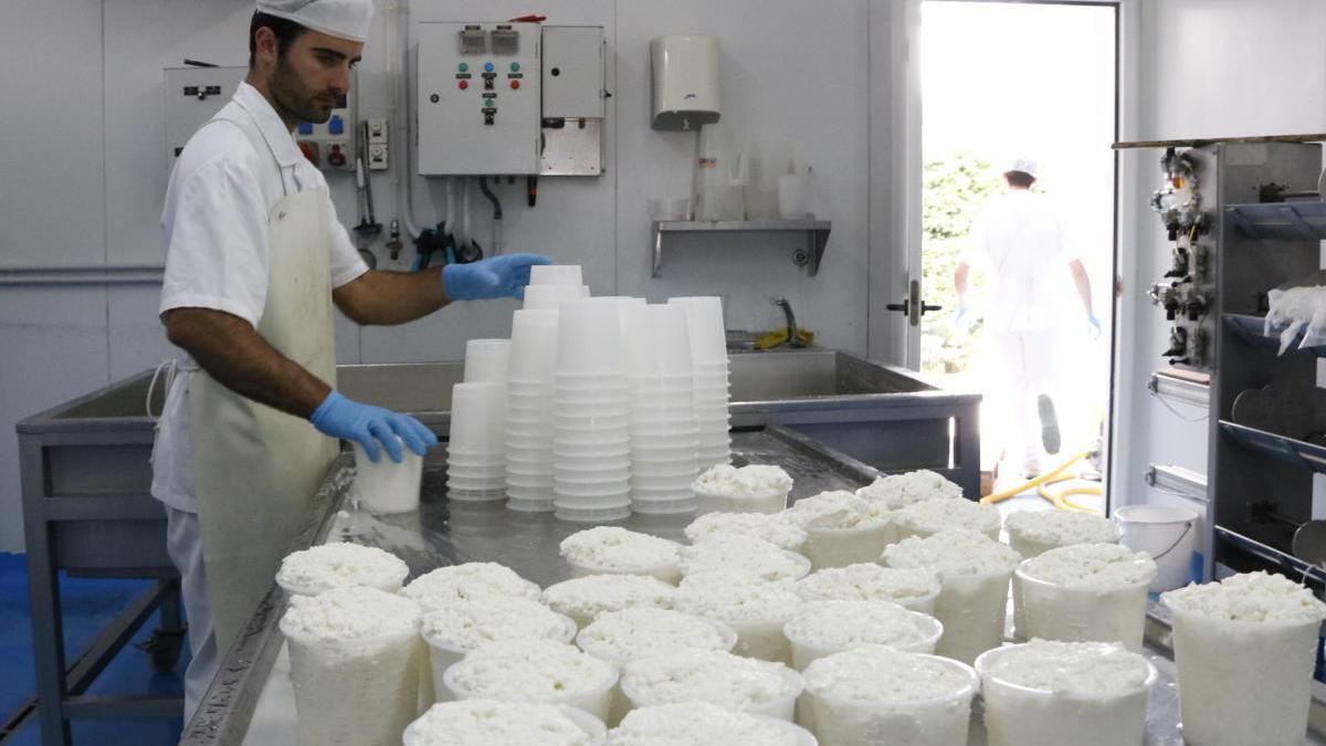 Una imatge del tractament de la llet per convertir-la en formatge.