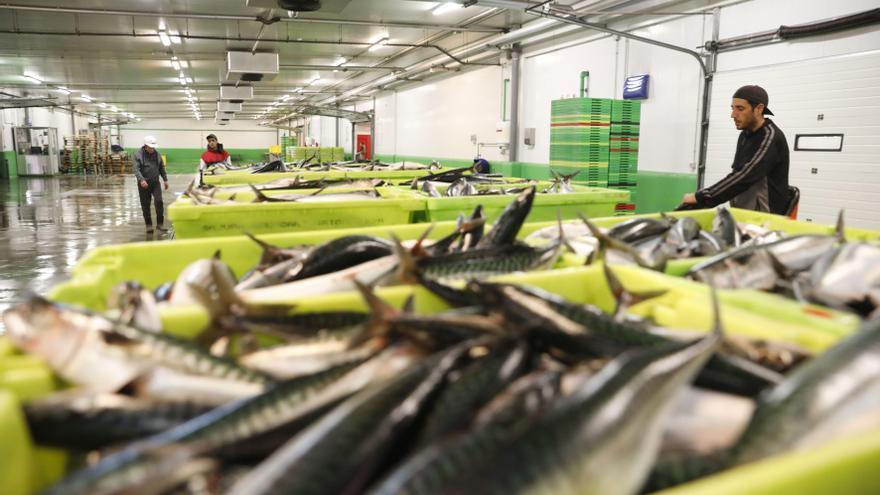 Asturias recibe un cupo de 0,9 millones de kilos de xarda para 2021