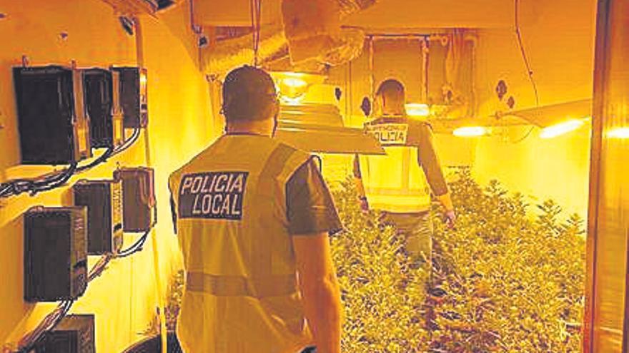 Detenido en Palma un hombre con 300 plantas de marihuana