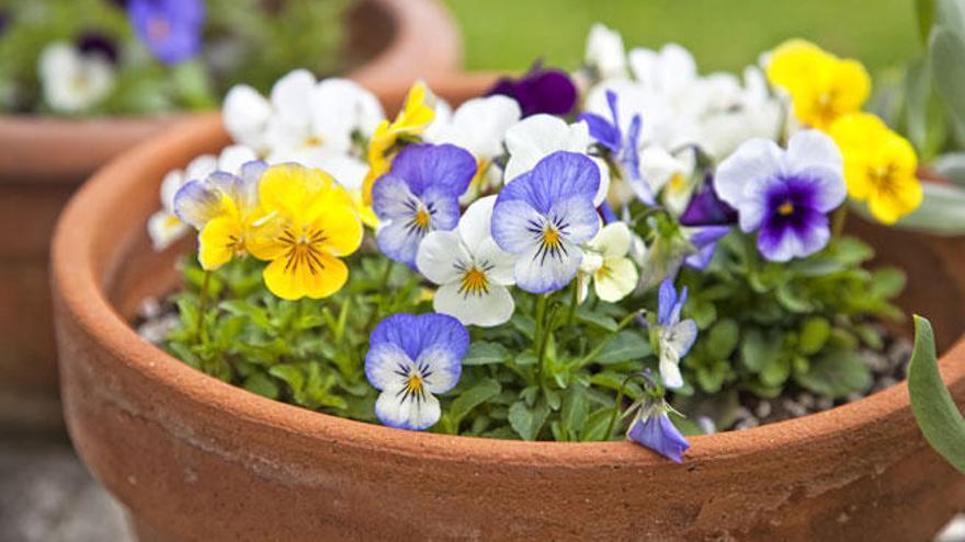Plantas de interior, armonía en tu hogar