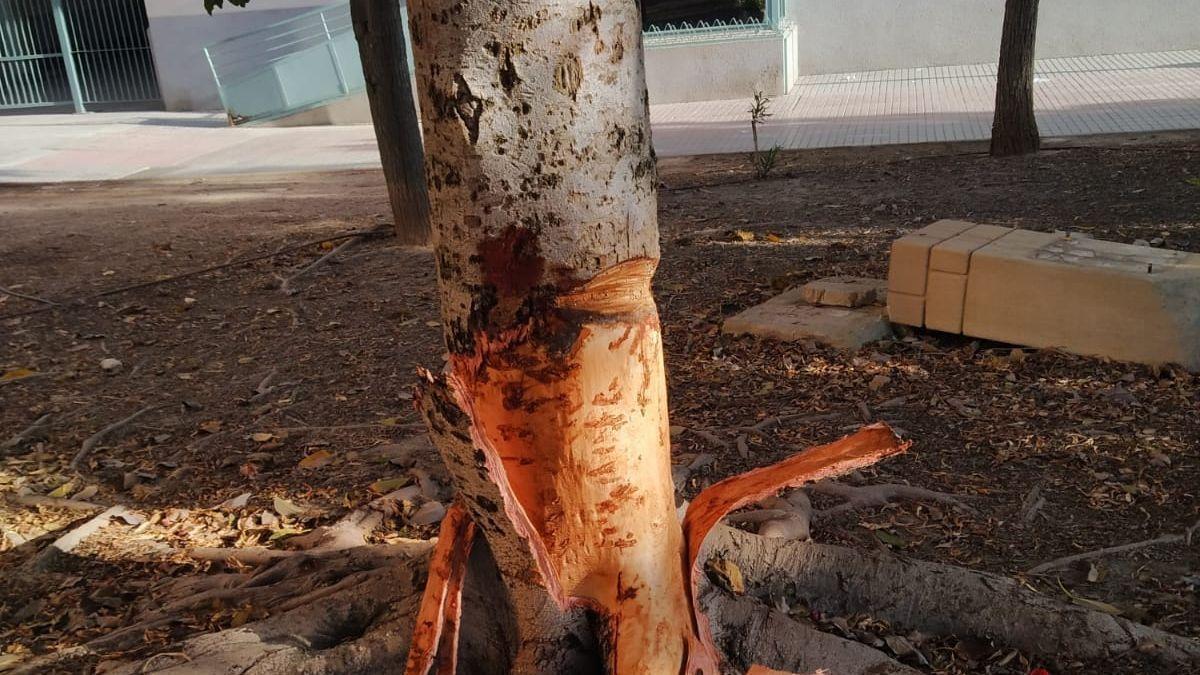 Daños que presuntamente ha causado en uno de los árboles con un hacha.