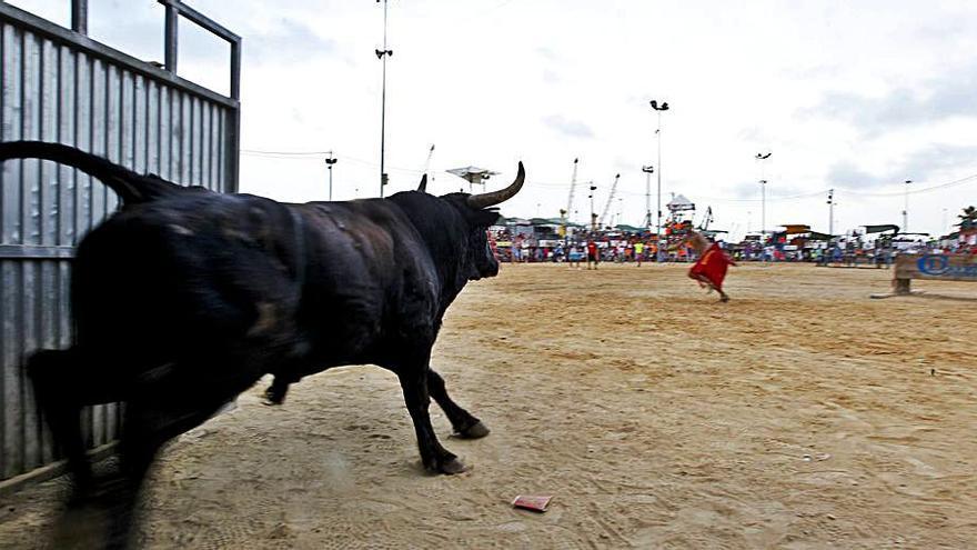Las peñas del Port de Sagunt preparan un calendario festivos con toros en agosto