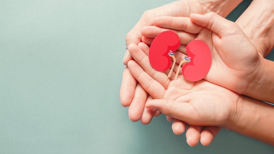 Nueve de cada diez familias consienten la donación de órganos tras perder a un ser querido