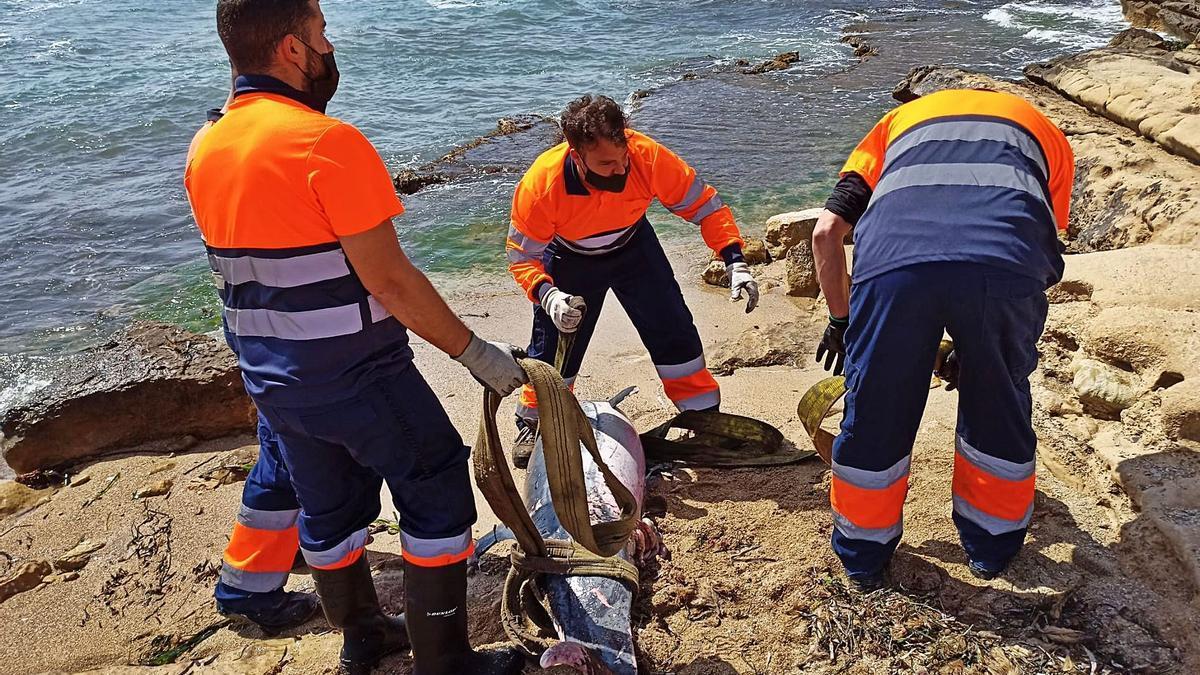 Localización de un delfín en las costas de la provincia de Alicante.