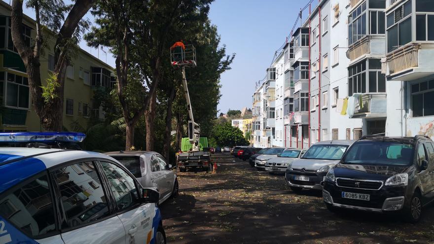 Una mujer, atendida tras caerle una rama en Santa Cruz