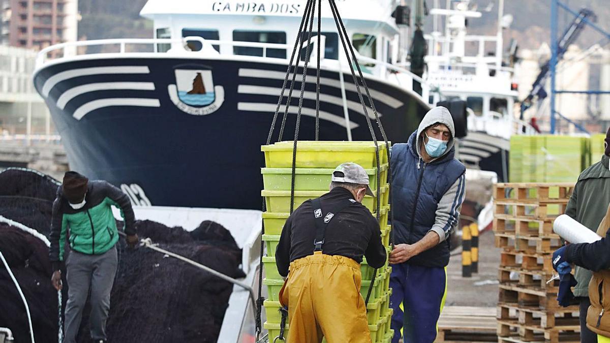Descargas de bocarte en El Musel al inicio de la costera el pasado mes de marzo. | Ángel González