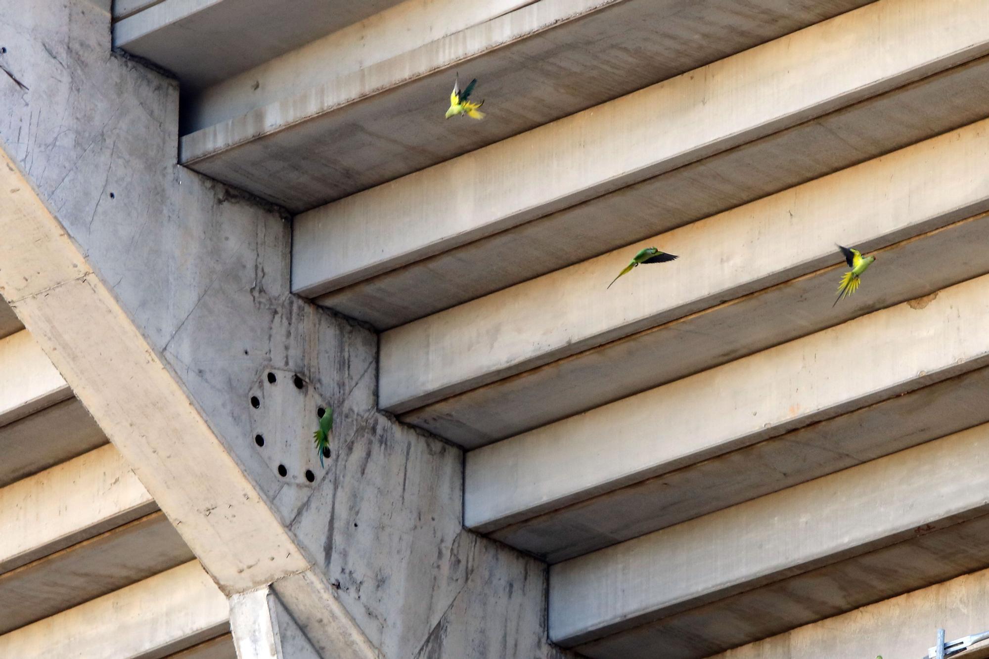 Así está el nuevo Mestalla: Degradación y óxido