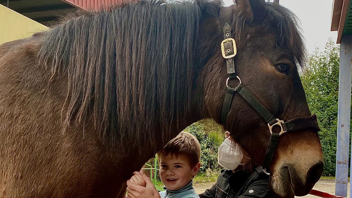 Un pequeño usuario interactuando con un caballo.
