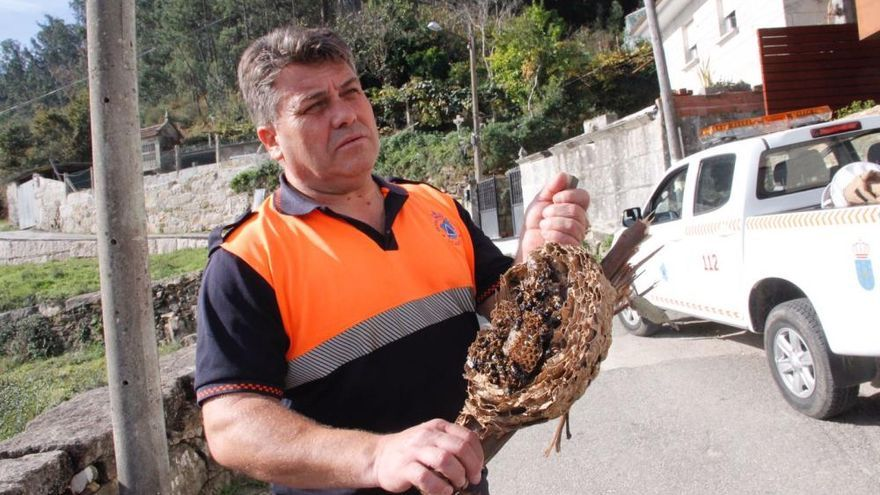 Los escaladores exterminan los seis nidos de velutina localizados en Vilaboa
