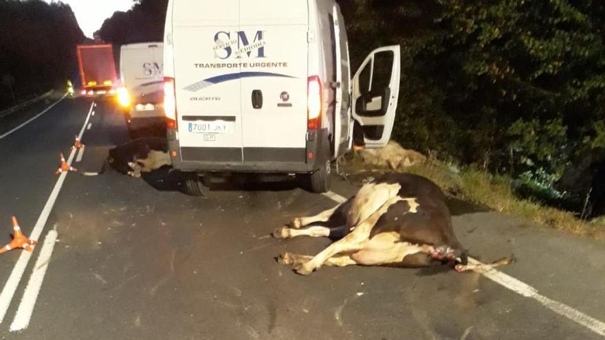 Un herido en Curtis tras atropellar y matar cuatro vacas con su furgoneta