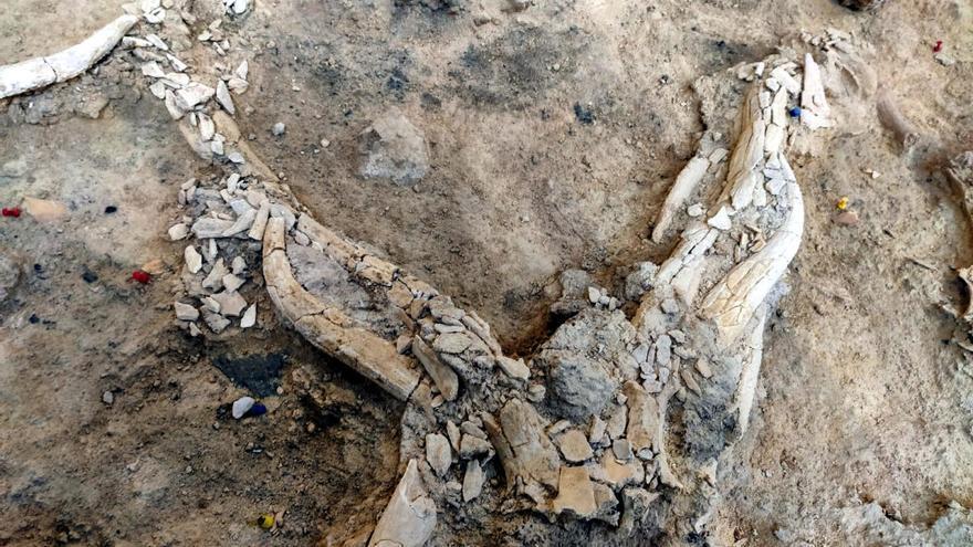 Les excavacions a l'Abric Romaní de Capellades deixen al descobert un campament de caçadors de cérvols