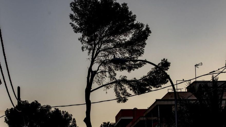 Playa de Palma: Kaum noch Kiefern an der Kiefern-Straße