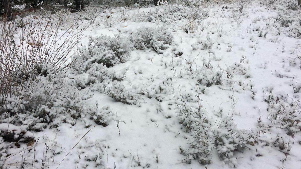 Nieve en Casas de Medina, Utiel