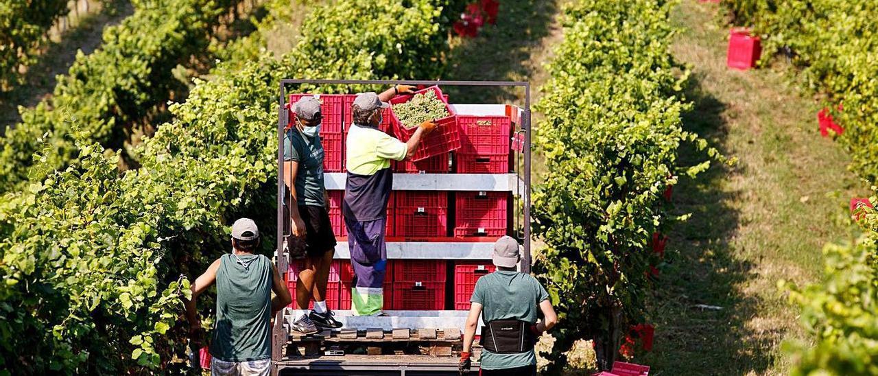 """Los profesionales vitivinícolas son algunos de los afectados por esta """"anomalía"""""""