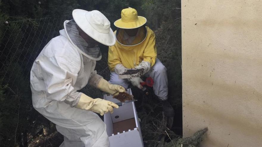 Los bomberos retiran un enjambre con miles de abejas en una vivienda de Beneixama