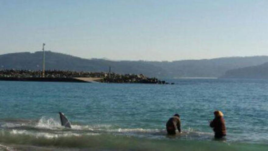 Una cría de ballena es devuelta al mar tras varar en la playa de Bares