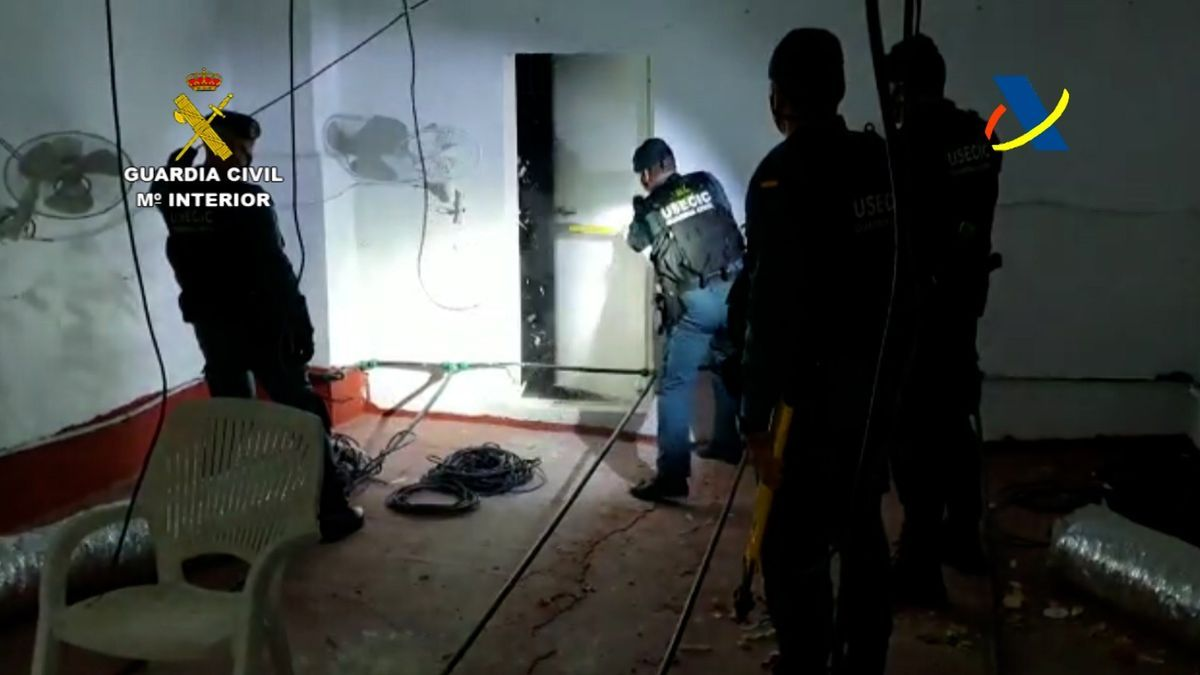 La Guardia Civil y la Agencia Tributaria desarticulan una banda que traficaba con marihuana.