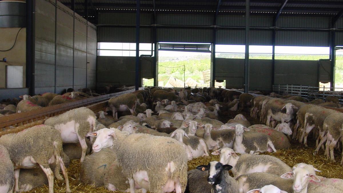 El Gobierno destinará 10 millones a ayudas a ganaderos de ovino y caprino