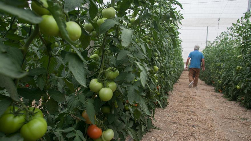 La subida del precio del agua lleva al abandono de cultivos en el noreste del Camp d'Elx