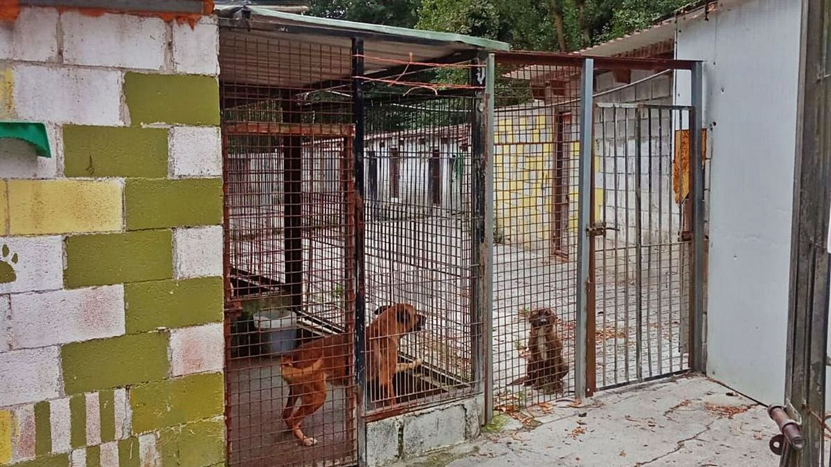 La entrada al albergue de animales de Mieres.
