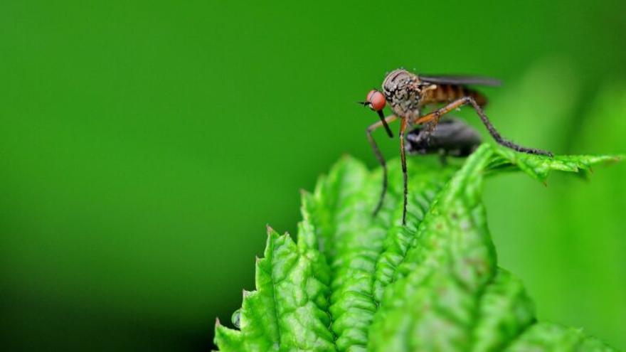 Las otras enfermedades a las que nos vamos a enfrentar… por culpa de los mosquitos