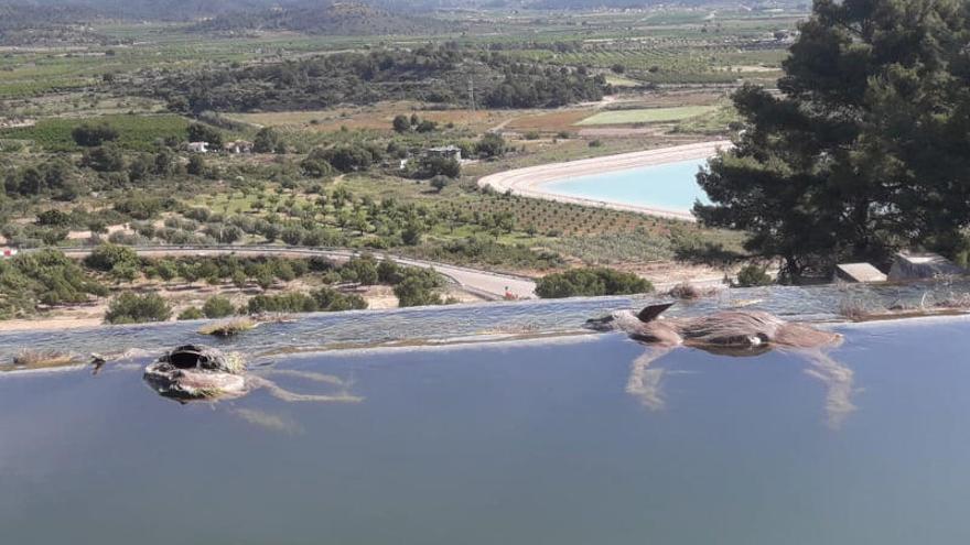 Localizan dieciocho corzos ahogados en el canal del Turia