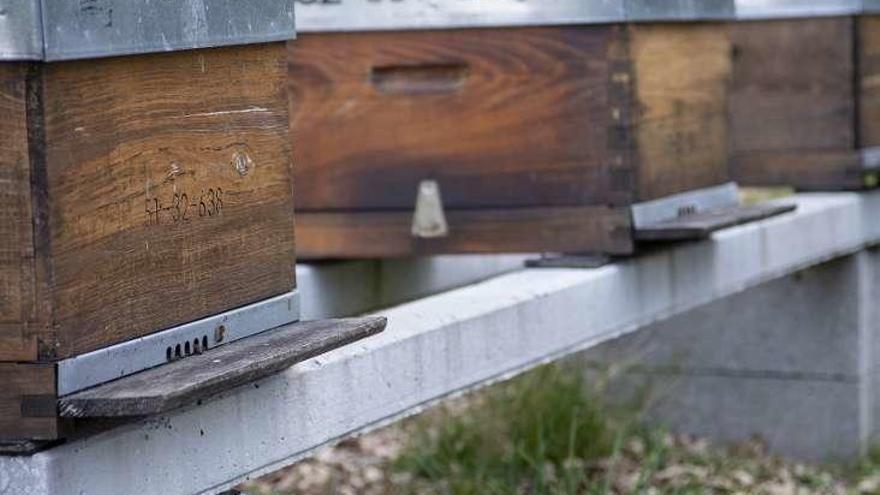 Castaños, carballos y silveiras para la mejor miel de España