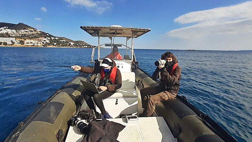 Un equip de la UdG segueix 25 corbs marins amb GPS