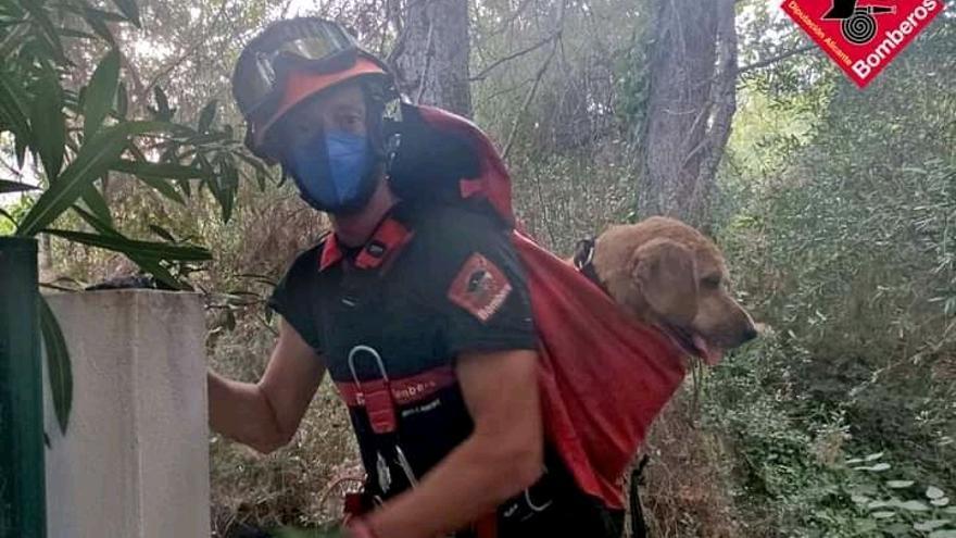 Los bomberos salvan a un perro que cayó a un pozo de 7 metros en Benissa