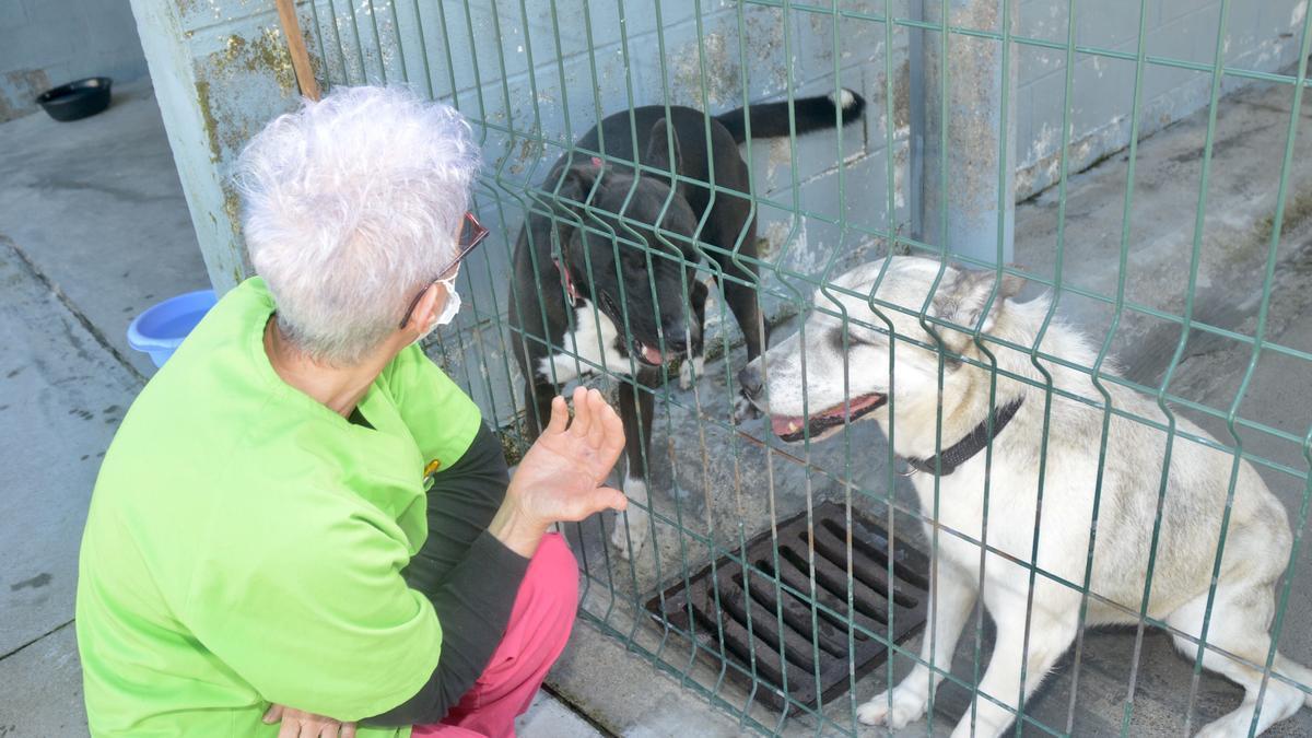 Una trabajadora de Os Palleiros con algunos de los perros en acogida