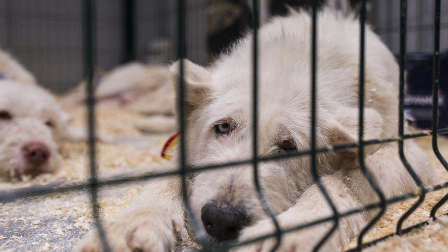 Absuelto un cazador al que la perrera municipal de Málaga denunció por supuesto maltrato