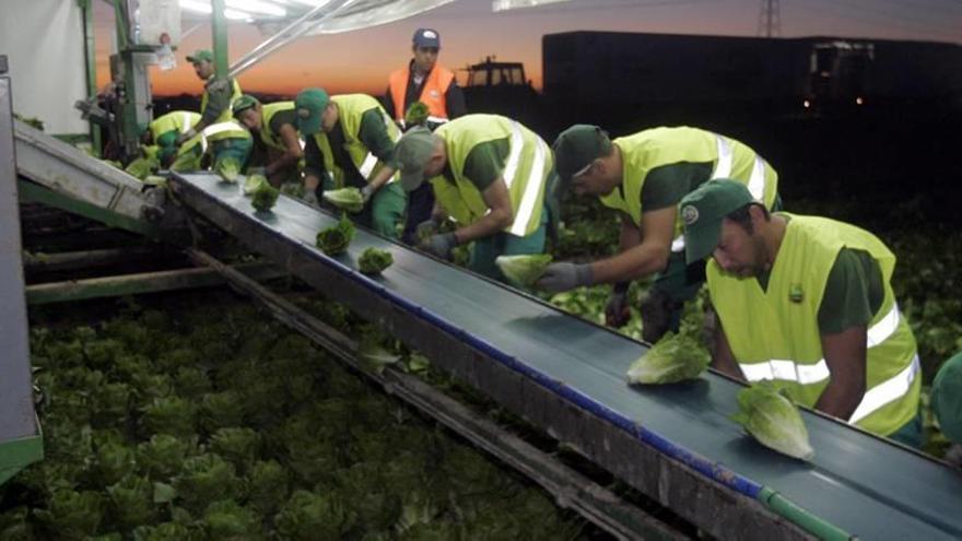 Los productores plantan cara al veto ruso y logran aumentar las exportaciones un 20%