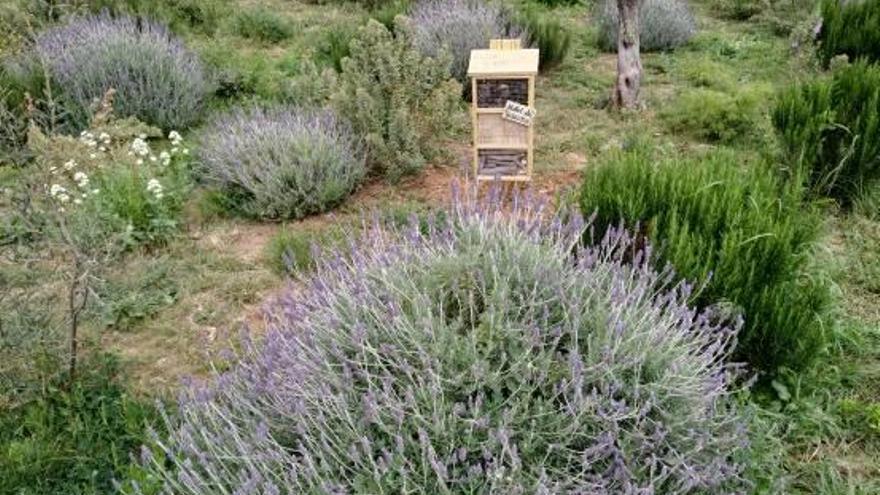 'Hoteles' para insectos  en el Parc de Malilla