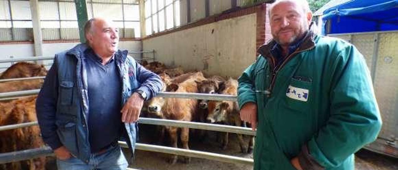 A la derecha, Armando Gutiérrez ayuda a subir los terneros al camión con rumbo a Toledo, ayer, en Cangas.