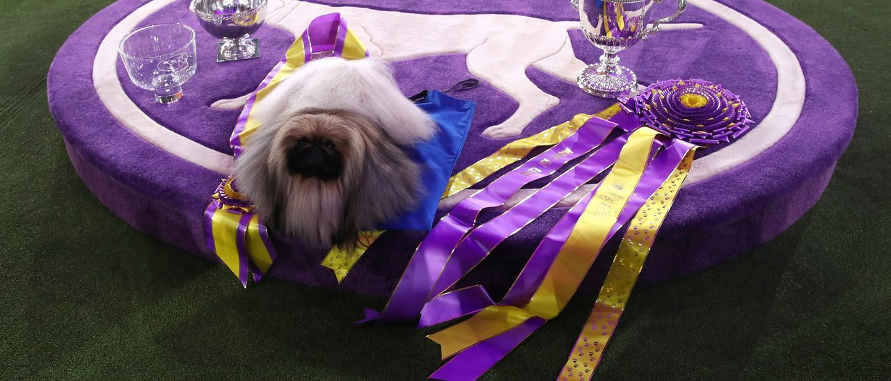 El concurs caní Westminster Dog Show