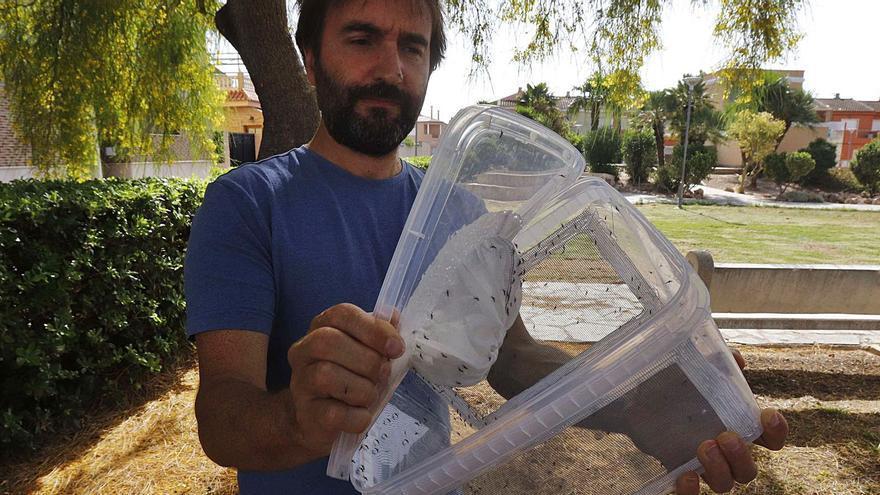 La lucha biológica logra reducir un 80 % el mosquito tigre en Polinyà