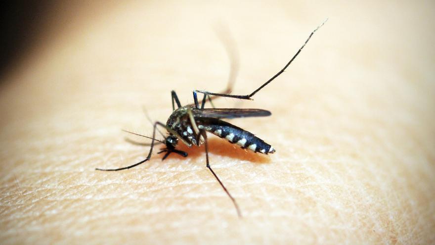 La solución casera para que los mosquitos y moscas no entren en tu casa