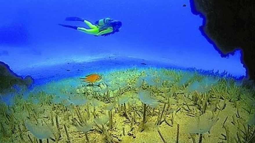 Lanzarote, paraíso submarino