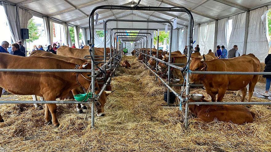 """El campo asturiano exige que la ganadería extensiva sea """"sector estratégico"""""""