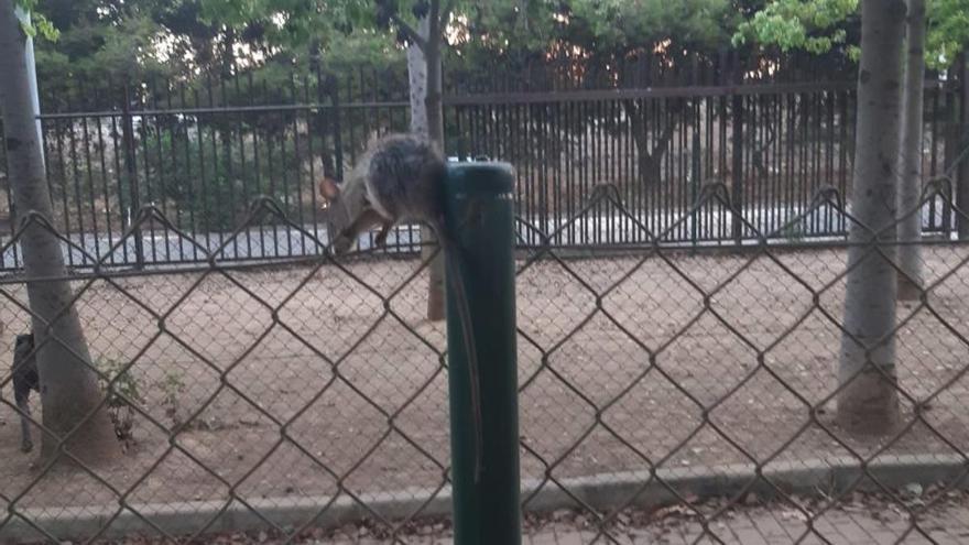 Los vecinos denuncian la presencia de ratas en el Parque de María Luisa