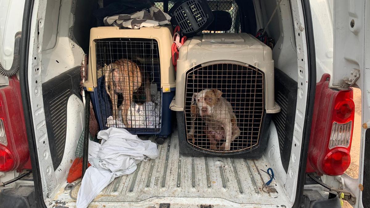 La Policía Local encontró dos perros sin documentación, uno enfermo.