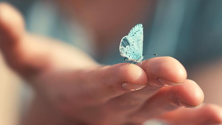 Esta es la razón por la que existen mariposas de tantos colores