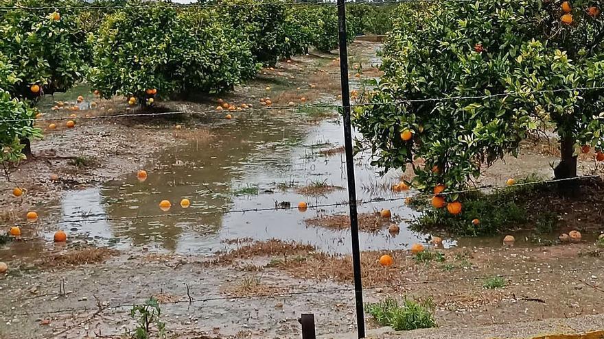 La lluvia deja 2 millones de pérdidas en Carlet al afectar a 6 millones de kilos de fruta