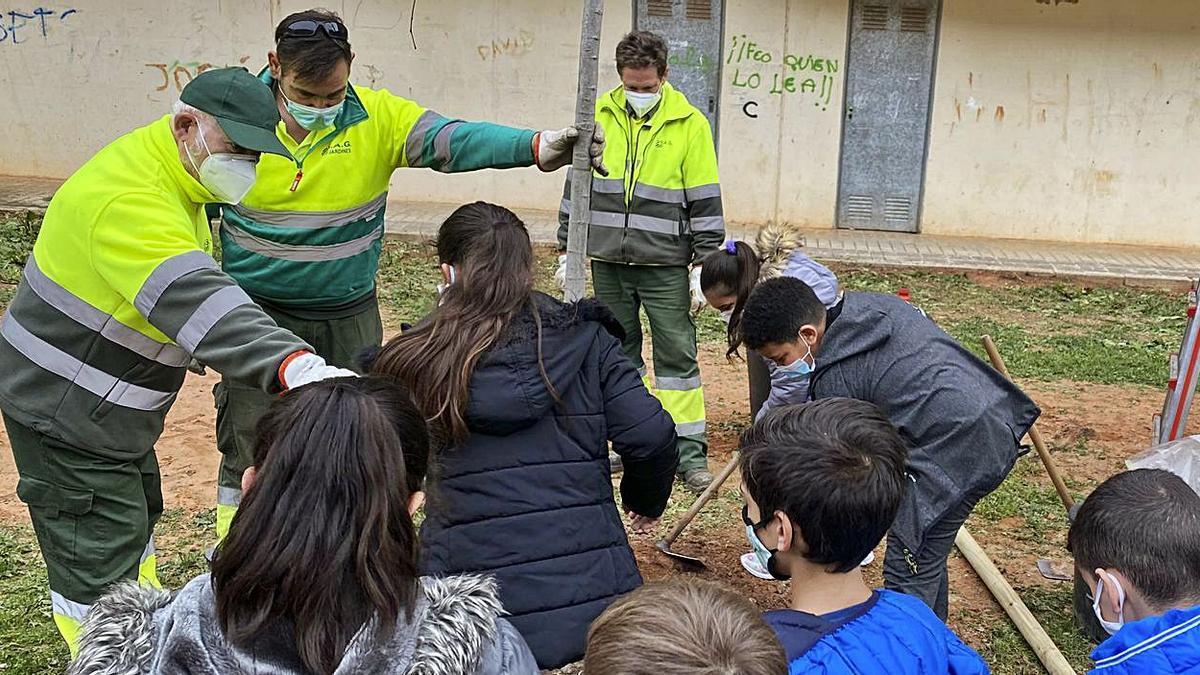 Escolares y trabajadores, en un momento de la plantación.  |  AYUNTAMIENTO DE SAGUNT
