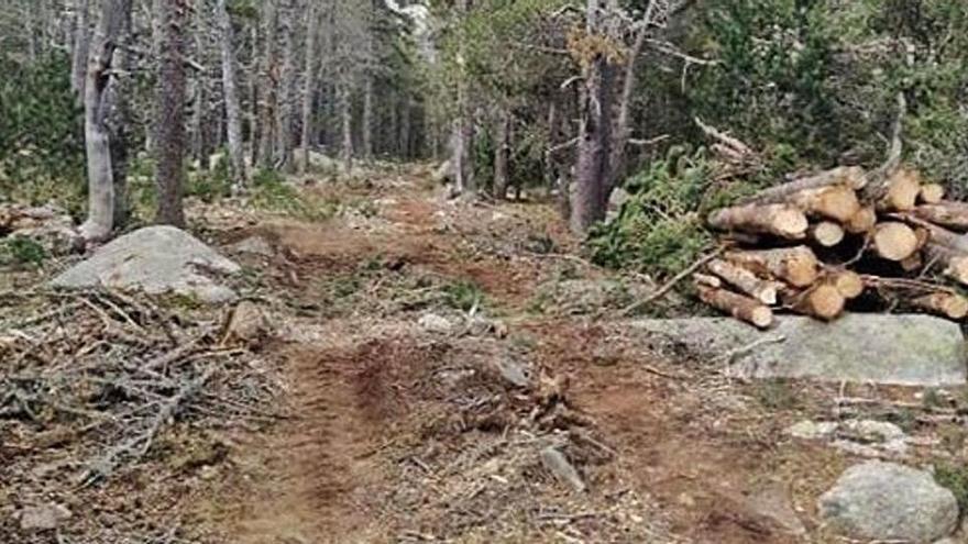 La tala al bosc de la Feixa inclou un pla de protecció natural de 25 anys