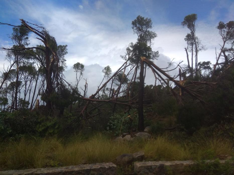 Spuren der Windhose im Gebiet von Banyalbufar.
