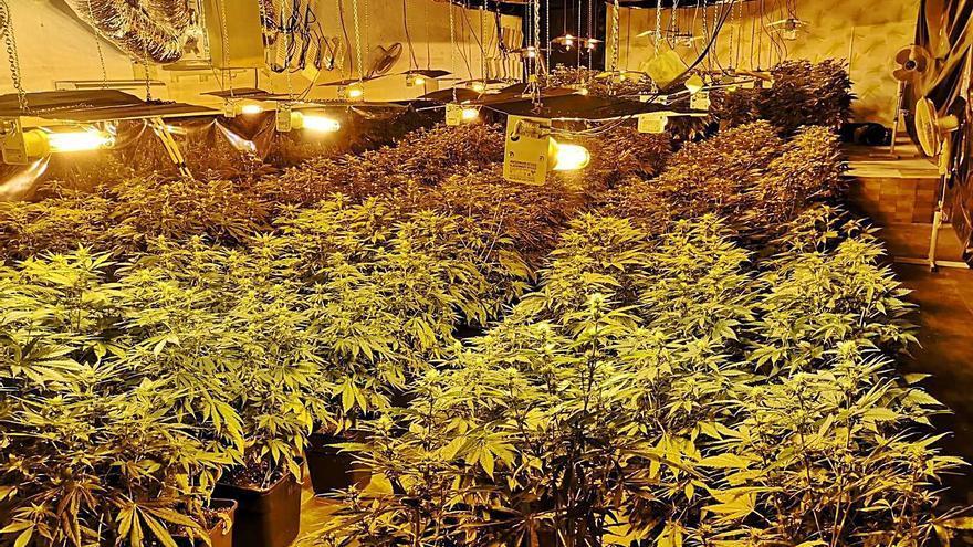 La Policía combate la fiebre de la marihuana en Elda con 14 detenidos en medio año
